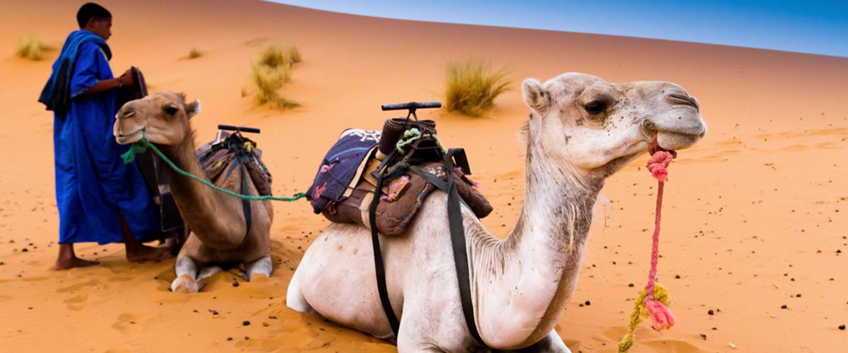Camel-trekking-MErzouga-sahara