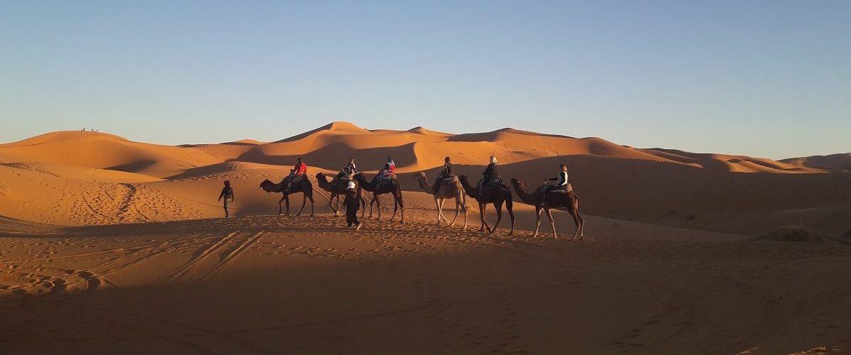 Merzouga-erg-chebbi-saharadeserttrips-trip-tour-camel-ride-sahara-desert-trips-tours-morocco-maroc-e1506549814421