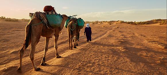 Home_Apartado_Tours por el desierto582x264
